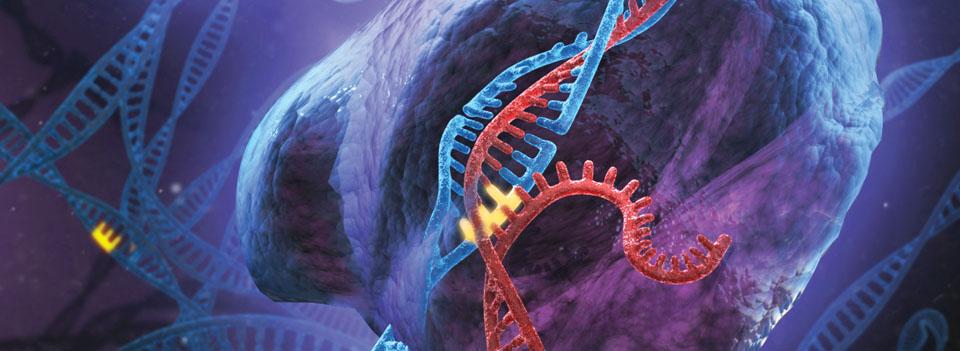 sursa imaginii http://www.genome-engineering.org/crispr/